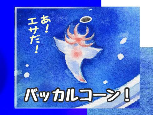 知床旅行「海の天使クリオネ」、衝撃の一面
